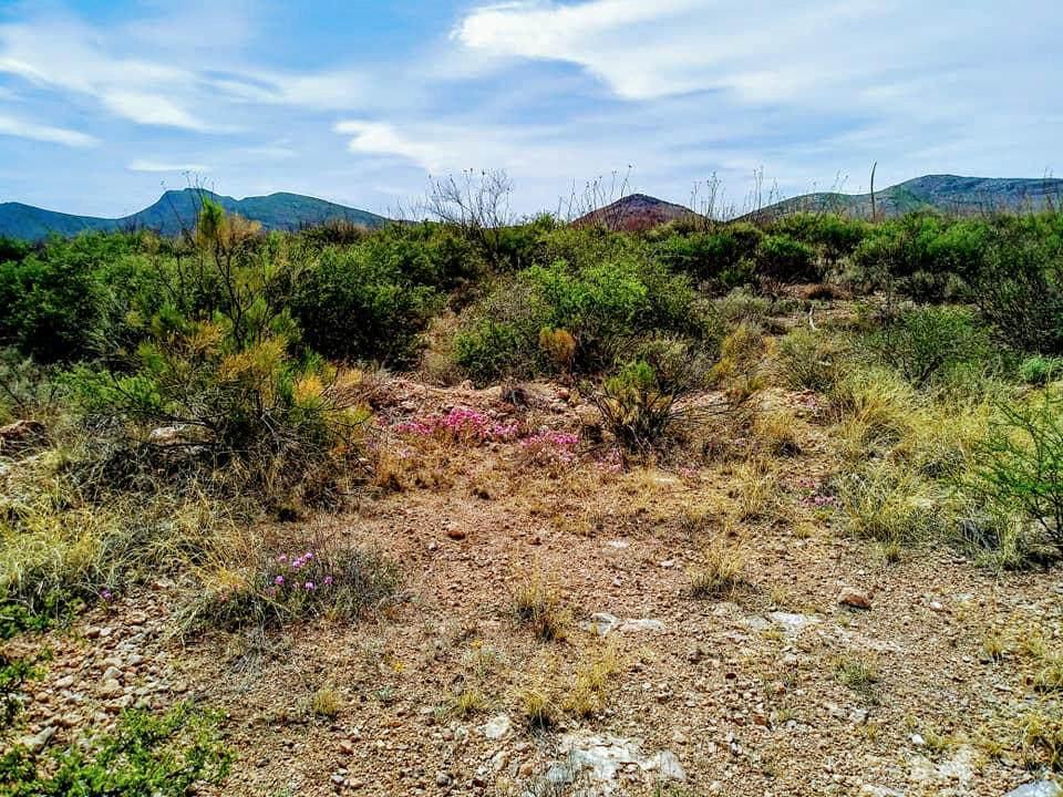 TBD Cochise Lane - Photo 1