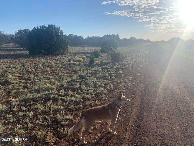22 County Road 8069, Concho, AZ 85924 (MLS #6243650) :: Openshaw Real Estate Group in partnership with The Jesse Herfel Real Estate Group