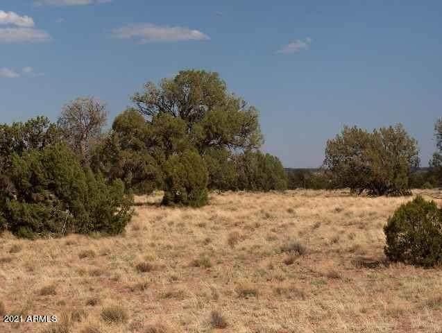 Lot 396 Chevelon Canyon Ranch, Overgaard, AZ 85933 (MLS #6247429) :: Yost Realty Group at RE/MAX Casa Grande