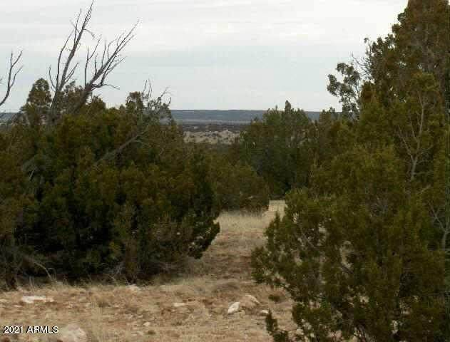 Lot 302 Chevelon Canyon Ranch, Overgaard, AZ 85933 (MLS #6248445) :: Yost Realty Group at RE/MAX Casa Grande