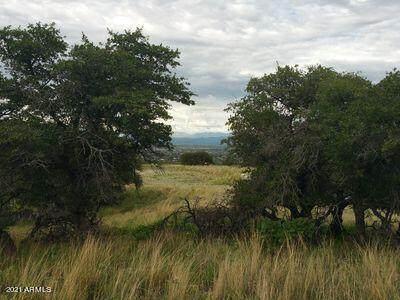 1 Acre E Moonrize Trail, Hereford, AZ 85615 (MLS #6249680) :: The Laughton Team