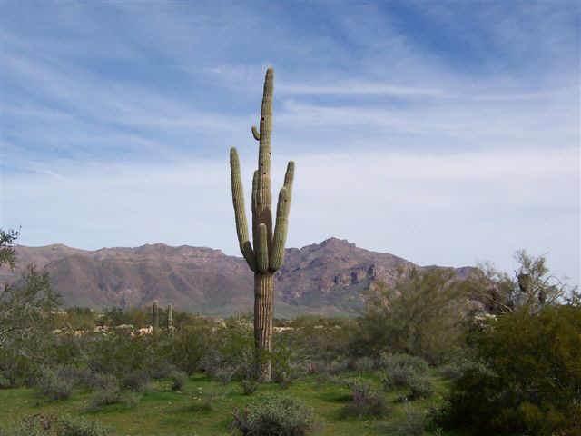 6614 E Arroyo Verdi Road, Gold Canyon, AZ 85118 (MLS #6303680) :: D & R Realty LLC