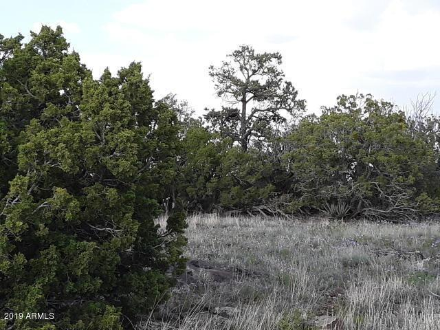 Lot 341 Show Low Pines Unit 3, Concho, AZ 85924 (MLS #5921104) :: Devor Real Estate Associates