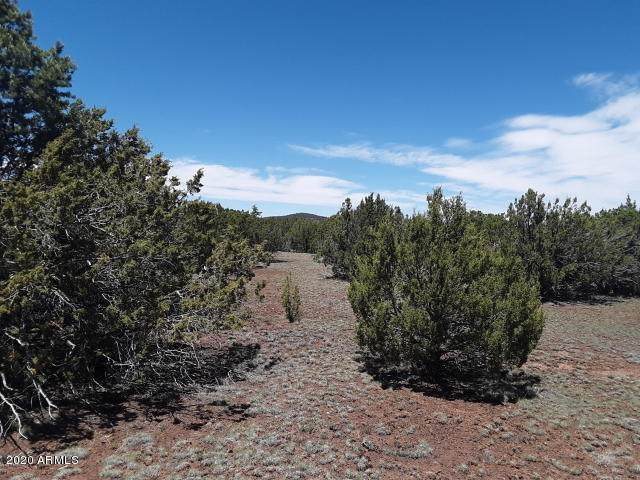 154 County Road 3187, Vernon, AZ 85940 (MLS #6073521) :: The Results Group