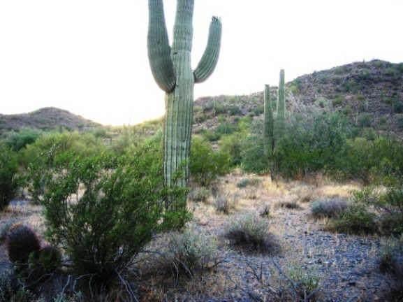 36260 Conestoga Trail - Photo 1