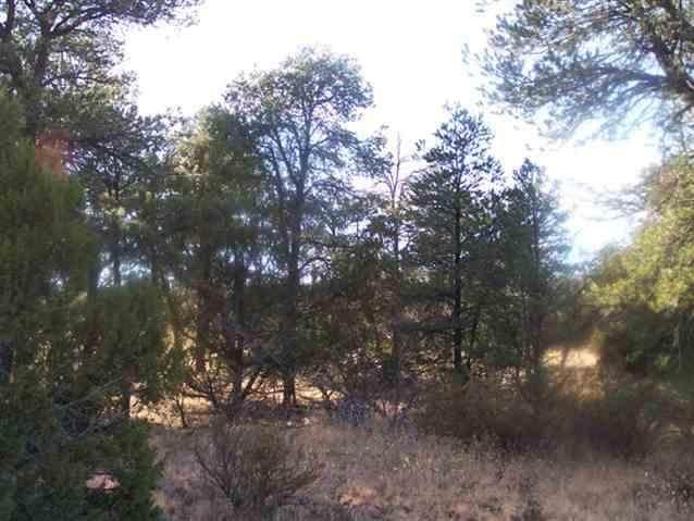3356 Apache Drive, Overgaard, AZ 85933 (MLS #4318849) :: Yost Realty Group at RE/MAX Casa Grande