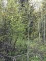 TBD Elk Mountain Drive - Photo 5