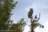 68 Bald Eagle Way - Photo 49