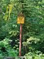 TBD Jasey Trail - Photo 9