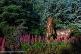 15 Fox Prowl Lane - Photo 10