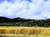 TBD Callicotte Ranch - Photo 5