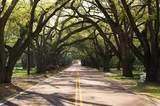 454 Little Pines Court - Photo 4