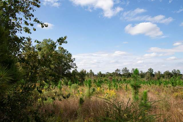 00 Old Stapleton Road, Stapleton, GA 30823 (MLS #461452) :: RE/MAX River Realty