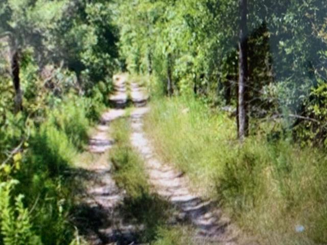 0 Morris Calloway Road, Appling, GA 30802 (MLS #445184) :: Meybohm Real Estate