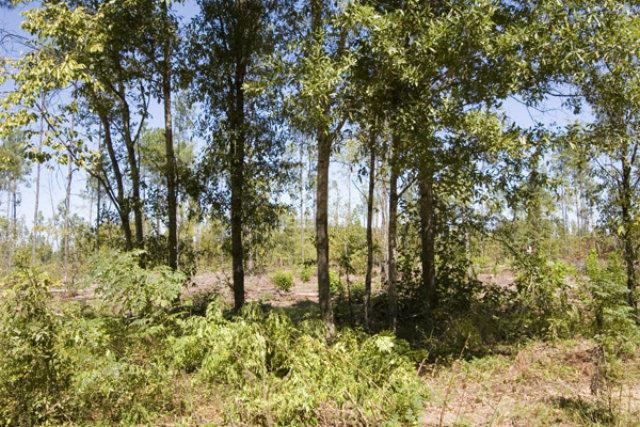 Tract 30 Pollett Road, Bartow, GA 30413 (MLS #325725) :: Meybohm Real Estate