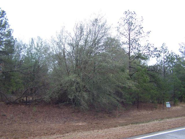 2067 Broome Road, Hephzibah, GA 30815 (MLS #357903) :: Melton Realty Partners