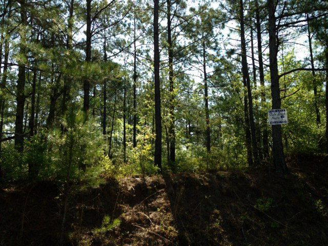 7A Old Draft Trail, Aiken, SC 29801 (MLS #408869) :: Melton Realty Partners