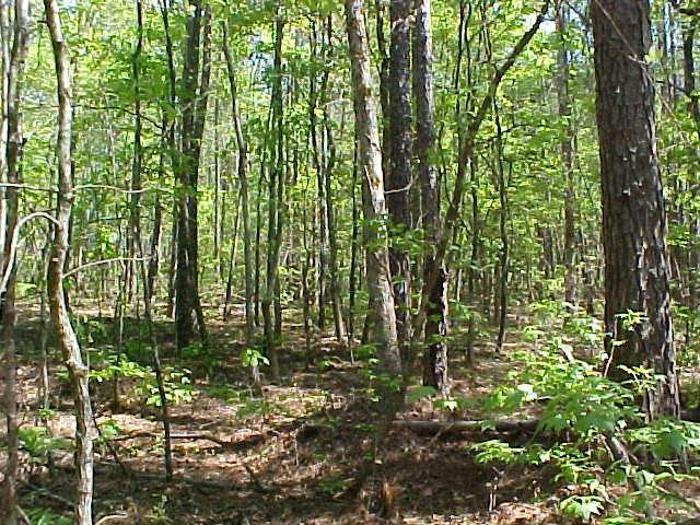 Lot 25C Lbk Road, Tignall, GA 30668 (MLS #417115) :: Venus Morris Griffin | Meybohm Real Estate