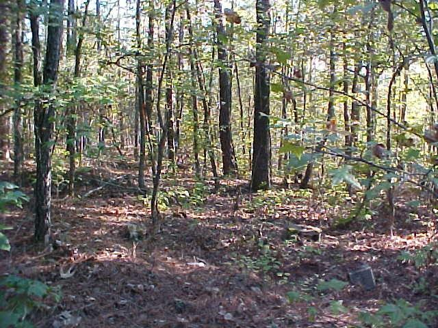 Lot 27 C Lbk Road, Tignall, GA 30668 (MLS #417117) :: Venus Morris Griffin | Meybohm Real Estate