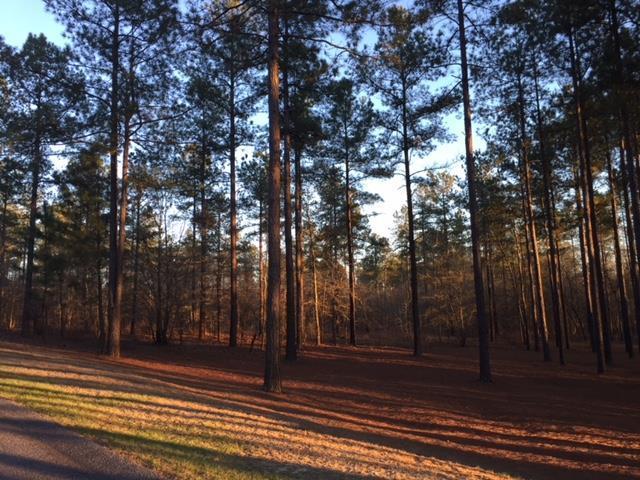 1730 Cedar Meadows Road, Aiken, SC 29803 (MLS #424428) :: Shannon Rollings Real Estate