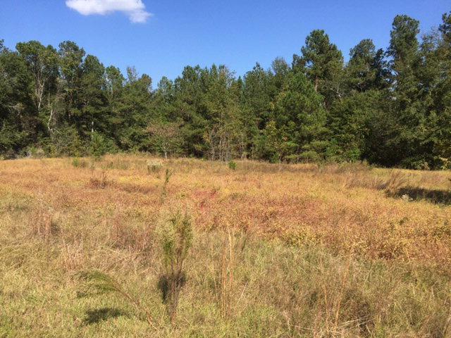2199 Green Pond Road, Aiken, SC 29803 (MLS #426784) :: Melton Realty Partners