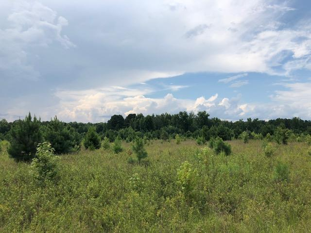 0 Cason Pond Road, Warrenton, GA 30828 (MLS #430329) :: Southeastern Residential