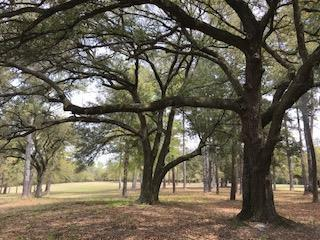 Lot 4 Redds Branch Road, Aiken, SC 29801 (MLS #439385) :: Shannon Rollings Real Estate