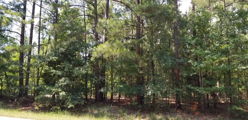Lot 4 Bermuda Avenue - Photo 1