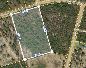 251 Whitetail Drive, Williston, SC 29853 (MLS #446436) :: REMAX Reinvented | Natalie Poteete Team