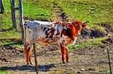 150 Brown Saddle Cv - Photo 35