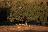 1400 Cattle Creek Rd - Photo 17