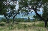 Lot 25 Lookout Mtn - Photo 4