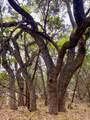 20901 Oak Dale Dr - Photo 1