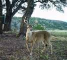 159 Cherokee Rdg - Photo 23