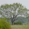 Tract 35 Fm 580 - Photo 3