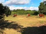 506 Horsethief Trl - Photo 5