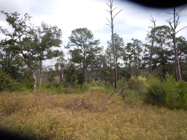 316 Tall Forest Dr, Bastrop, TX 78602 (#4620542) :: Lancashire Group at Keller Williams Realty