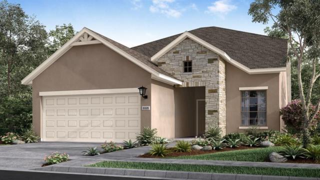 5071 Cassia Way, Round Rock, TX 78665 (#8315443) :: Watters International