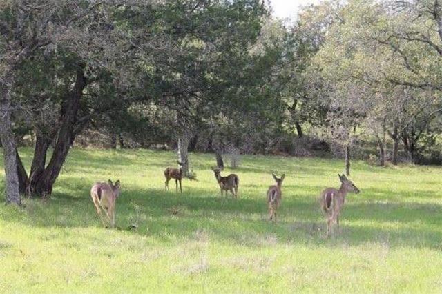 115 Cactus Cor, Horseshoe Bay, TX 78657 (#9033796) :: Watters International