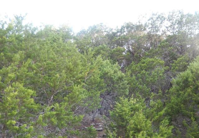 21005 Stone Cliff Dr, Lago Vista, TX 78645 (#9888707) :: The ZinaSells Group