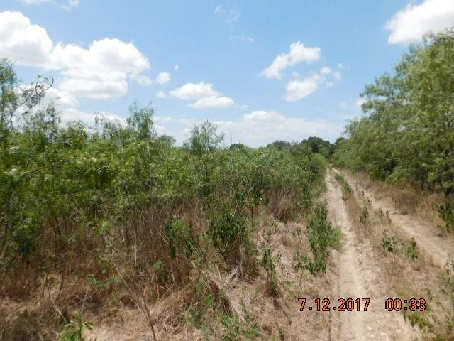 1 Acres Walter Hoffman Rd, Cedar Creek, TX 78612 (#2679742) :: Kevin White Group