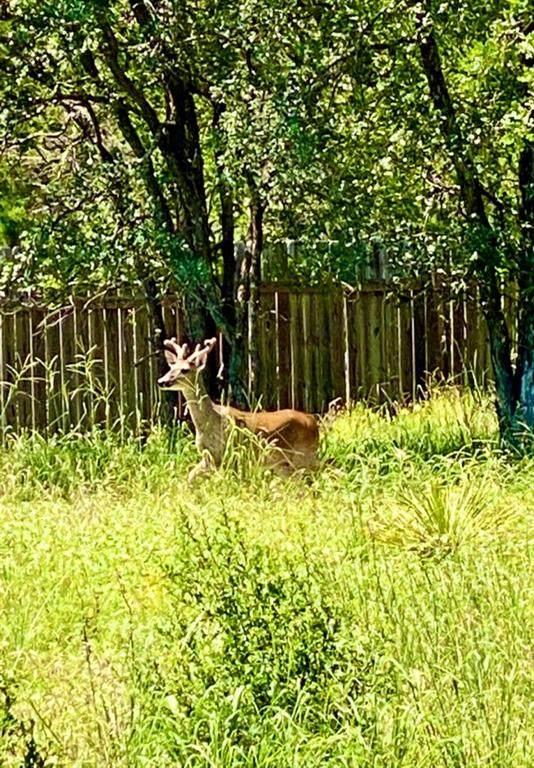 LOT 283,284,285,286 Forest Oaks Dr - Photo 1