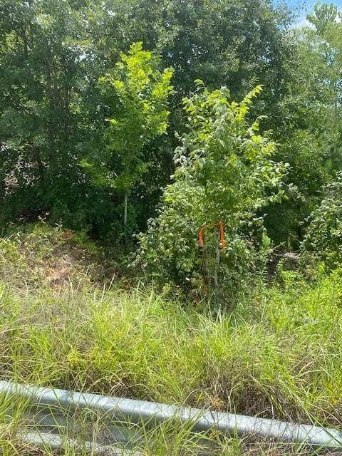 Lot 709 Manawianui Dr, Bastrop, TX 78602 (#5449100) :: The Summers Group