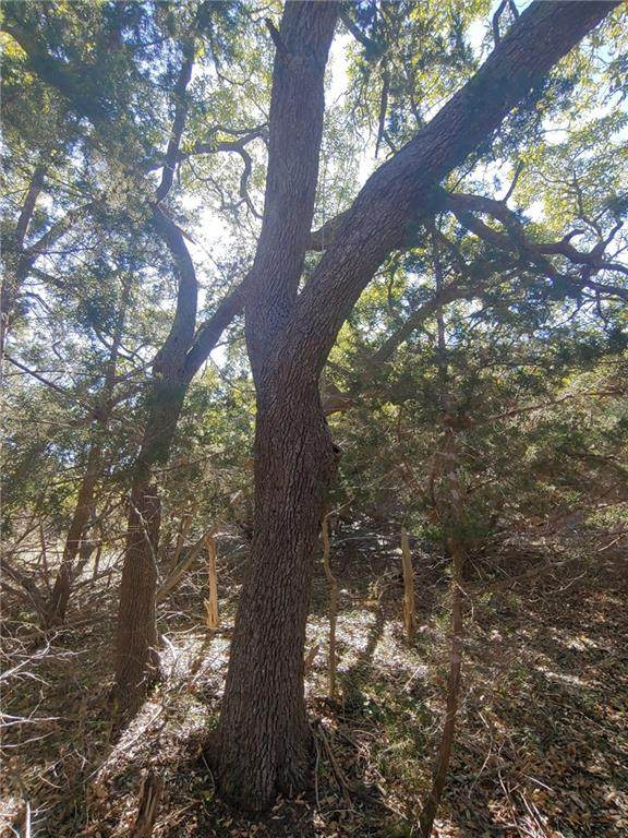 TBD Rolling Hills Road, Blanco, TX 78606 (#5559162) :: 12 Points Group