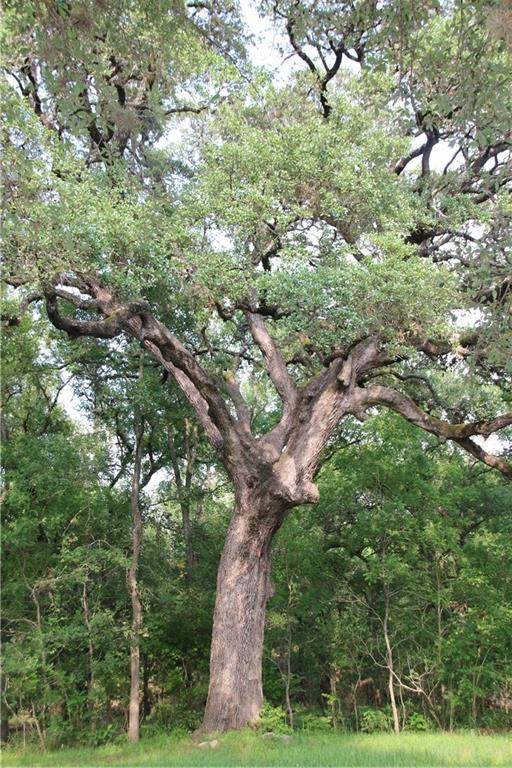 1007 Live Oak Dr, Manchaca, TX 78652 (#5740109) :: The Smith Team