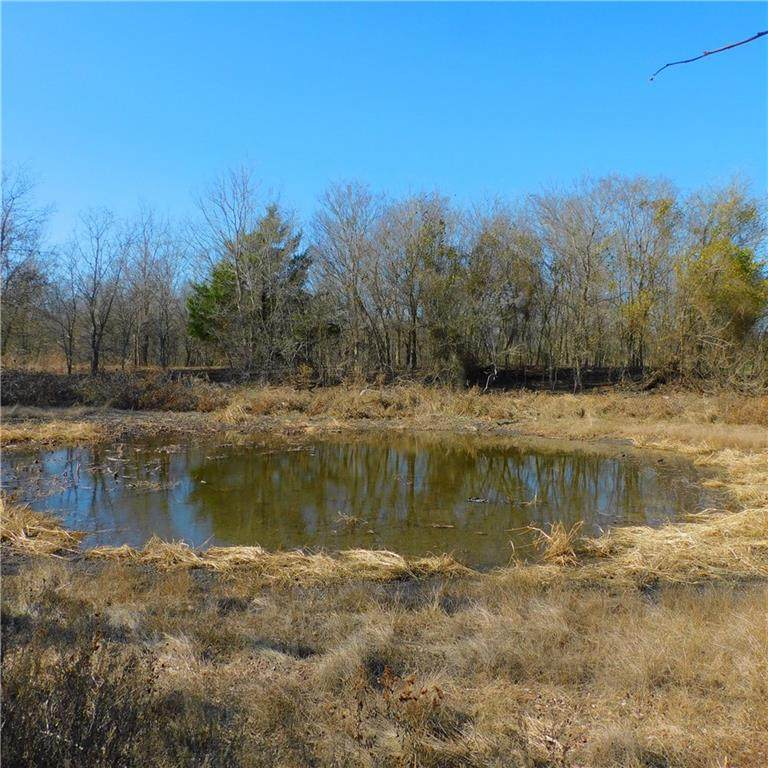Tract 13-20 County Road 417 - Photo 1