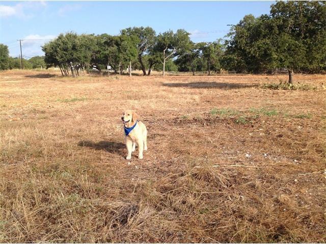 106 Enclave Park Cv, Georgetown, TX 78633 (#9159070) :: Forte Properties