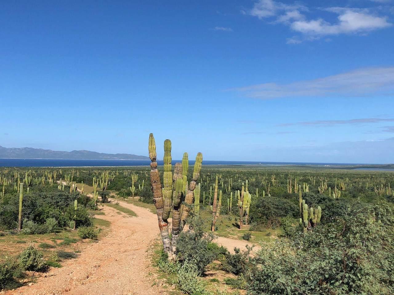 Camino De Acceso - Photo 1