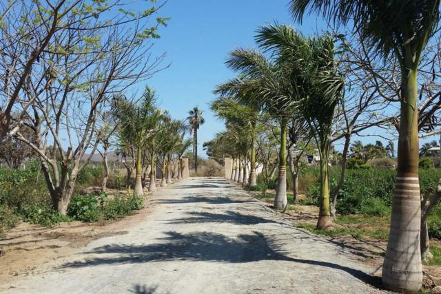 Rancho Pescadero, Pacific, BS  (MLS #18-2812) :: Los Cabos Agent