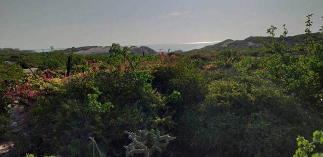 Fraccion 1 Lote 1, East Cape, BS  (MLS #19-2413) :: Los Cabos Agent